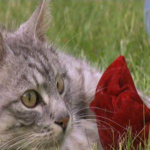 Katter älskar vänderot.