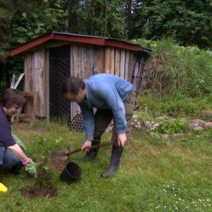 Marit och Krisu planterar i trädgården.