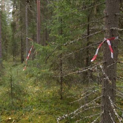 Fornminnesområde i en skog i Pörtom.