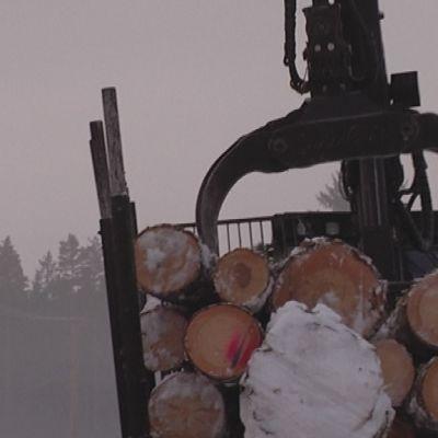 Skogstraktor lastar av stockar för vidare transport