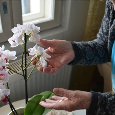 Vanha nainen hoitaa orkideaa.