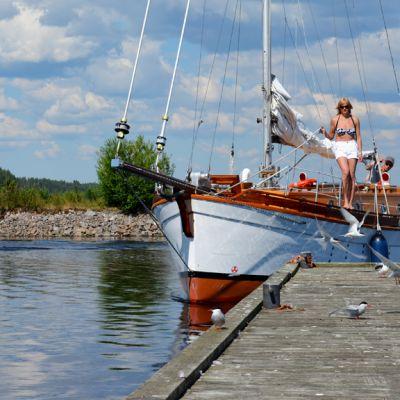Linnut häiritsevät laituriin pyrkiviä veneilijöitäq