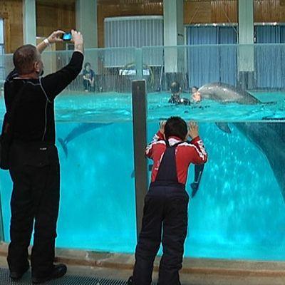 Turisti kuvaa delfiiniä Särkäniemen delfinaarion altaan ääressä.