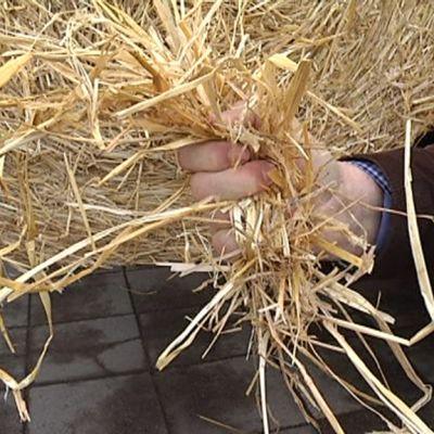 Myllykoskelle suunniteltu bioetanolilaitos käyttäisi raaka-aineena olkea