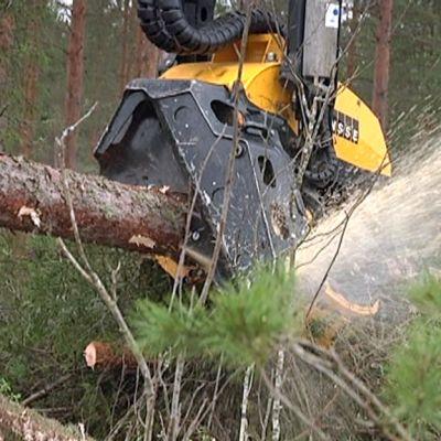 Monitoimikoneen saha katkaisee tukkipuun määrämittaan.