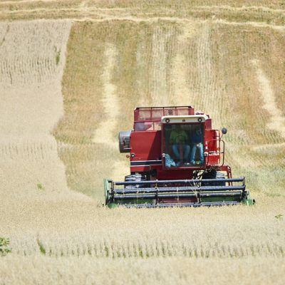 Maanviljelijä puimurissa keskellä peltoa.