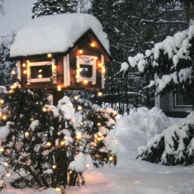 Valaistu lintulauta ja pensas talvisessa pihamaisemassa.