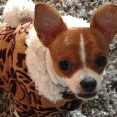 Koirakin tarvitsee pakkasella takin ylleen ulkoilureissulle.