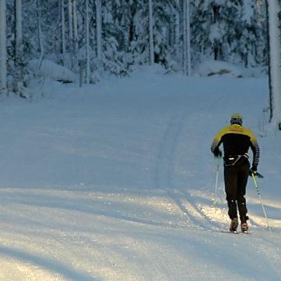 Hiihtäjä sivakoi latua pitkin lumiseen metsään