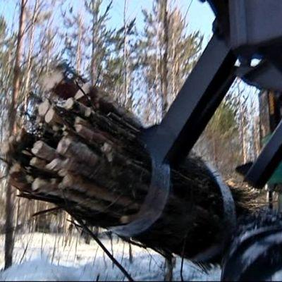 Metsäkone nostaa puunippua.