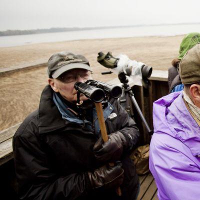 Seppo Vuolanto (oik.) Espoon Laajalahdessa Maarin tornissa 5. toukokuuta 2012. Tornien taisto on BirdLife Suomen järjestämä leikkimielinen kilpailu, jossa pyritään havaitsemaan lintutornista mahdollisimman monta lajia kahdeksassa tunnissa.