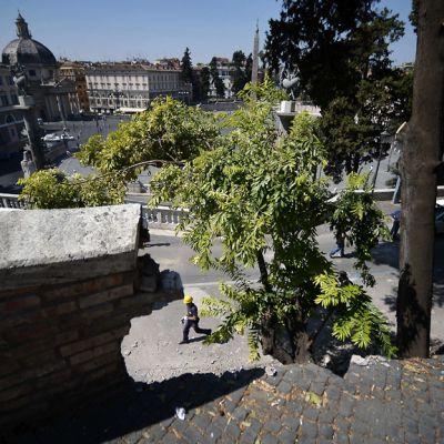 Romahtanutta muuria Roomassa.