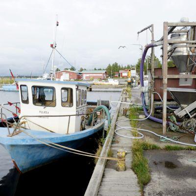 Kalastusaluksia Hailuodon Marjaniemessä.