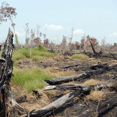 Polttamalla tuhottua metsää Indonesian Sumatralla toukokuussa.