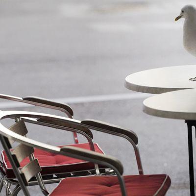 Lokki seisoskelee terassipöydällä Helsingissä.