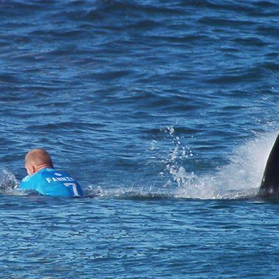 Surffari ja hainevä hänen takanaan.
