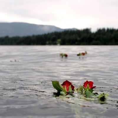 Ruusuja kellumassa vedessä Utøyan saaren edustalla.