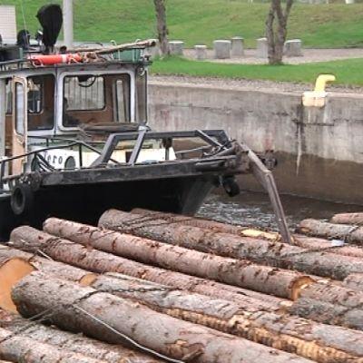 Hinaaja Tero tukkilauttojen perässä Joensuun kanavassa.