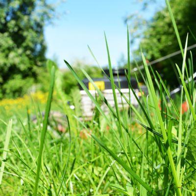 Ruohonleikkuri on liian pitkäksi kasvaneen nurmikon keskellä.