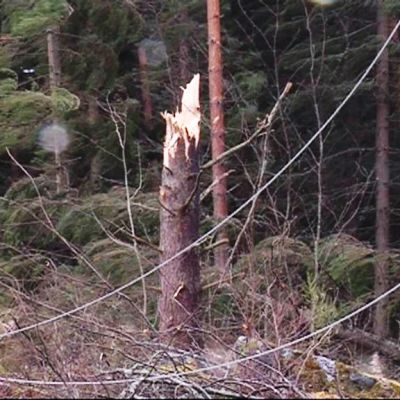 Eino-myrsky kaatoi vuonna 2013 puita ja katkoi sähköjä.