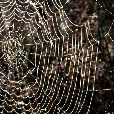 Aamukasteinen hämähäkin seitti auringon kimalluksessa.