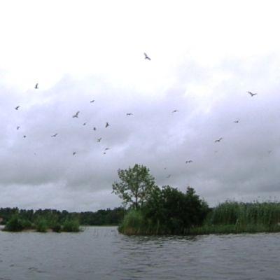Lokkeja lentää saaren yllä