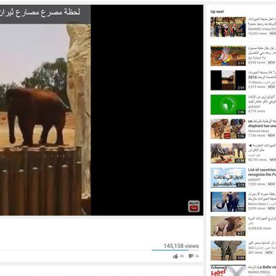 Pikkutytön tappaneen kiven heittänyt norsu.