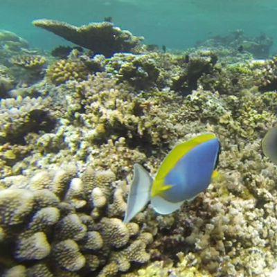 Koralliriutta Malediiveillä.