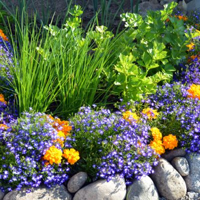 Kuvassa näkyy kellertäviä ja violettejä kukkia kivillä ympäröidyssä kukka penkissä.