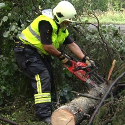 Mies pätkii kaatunutta puuta.