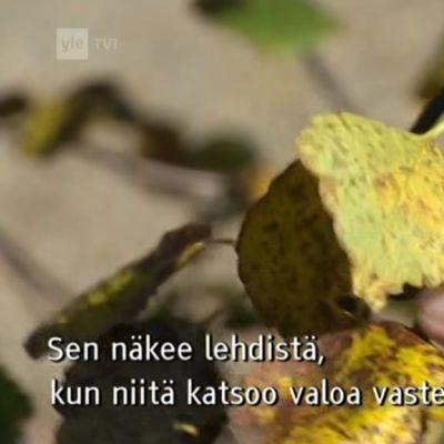 Yle Oddasat