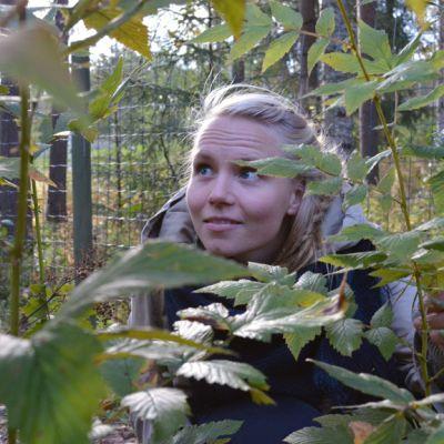 Yrttineuvoja Elsa Lankinen katselee mesiangervon lehtiä.