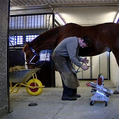 Mies kengittää hevosta.