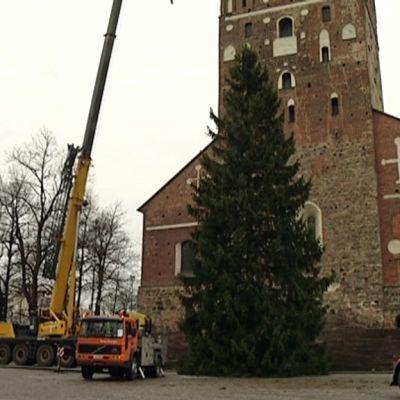 Joulukuusta pystytetään Turun tuomiokirkon edustalle.