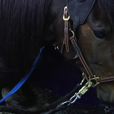 Hevonen vesikävelytyskoneessa