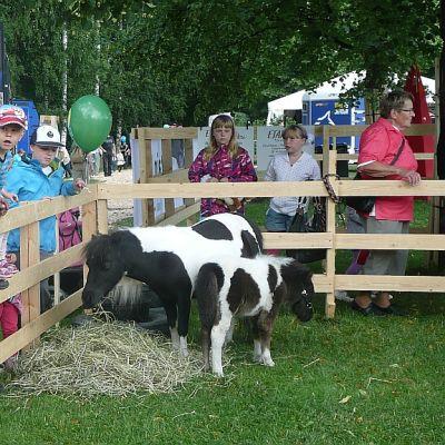 Farmarin eläinkenttä kiinnostaa pieniä näyttelykävijöitä Seinäjoella.