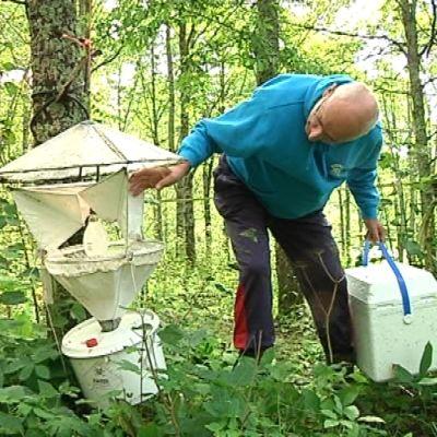 Perhoslajeja tutkitaan pyydyksien avulla.