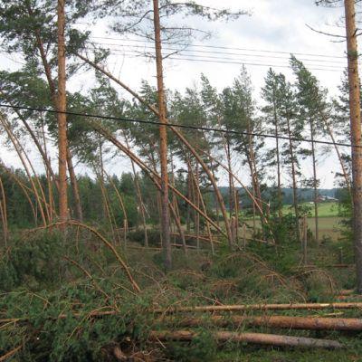 Myrskyn runtelemaa metsää Reisjärvellä.