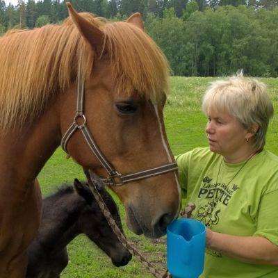 Tuisku-Tella varsoineen kirmasi kesälaitumelle Elina Kylämäen koelypsyn jälkeen.
