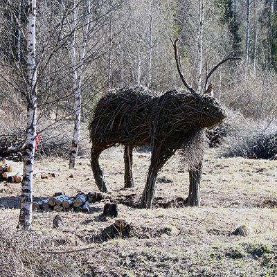 Pajuporo Rovaniemen Hirvaalla