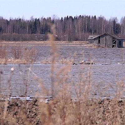 Tulvaveden peittämä lakeus.