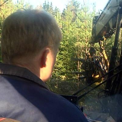 Metsäkone korjaa energiapuuta taimistosta.