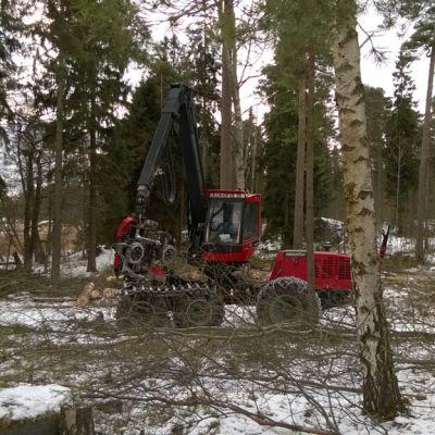 Metsäkone hakkutöissä Kruunuvuorenrannassa.