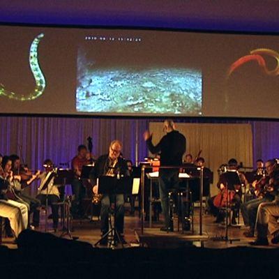 Kymi Sinfonietta soittaa Kotkan konserttitalolla