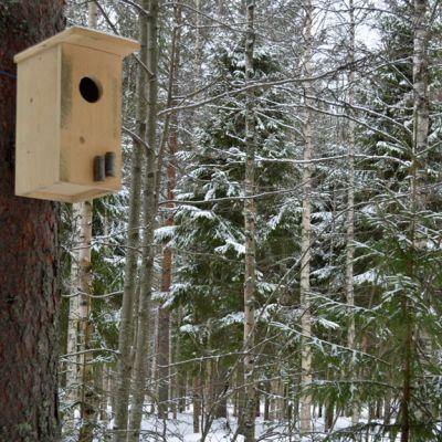 Helmipöllön linnunpönttö männyssä talvisessa maisemassa.