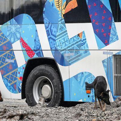 Kulkukoiria olympialaisten kuljetusbussin edustalla.
