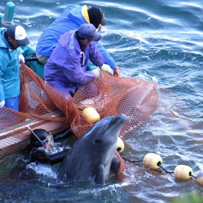Delfiinikalastus.