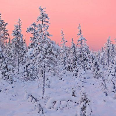 Aamuaurinko värjäää talvisen metsän