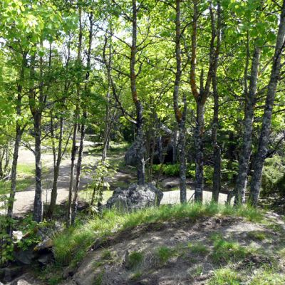 Sulkavuoren metsä