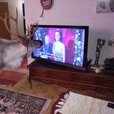 Aatu katsoo televisiota.